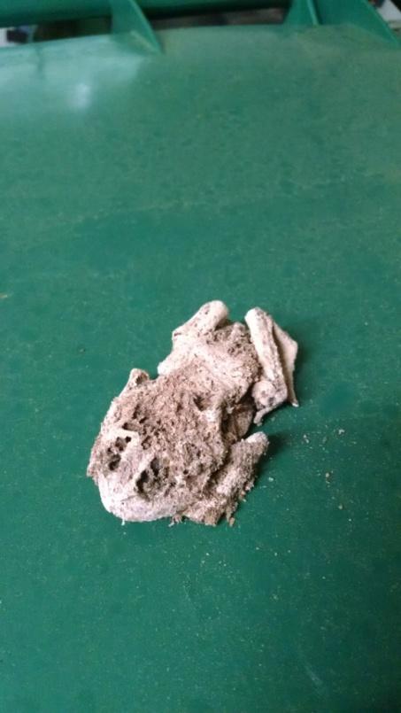 Mummy Toad