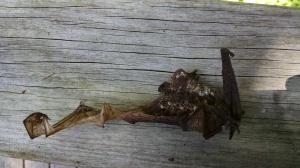 Bat 13