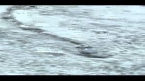 Iceland's Ice Worm