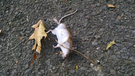 This mouse was found in our driveway.