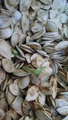 sprouted-pumpkin-seeds-1