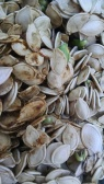 sprouted-pumpkin-seeds-3
