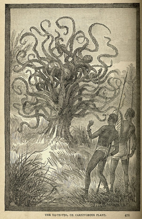 This public domain illustration is from an 1886 book called Sea and Land by J.W. Buel and depicts a person being consumed by the legendary Madagascan Man-Eating Tree.