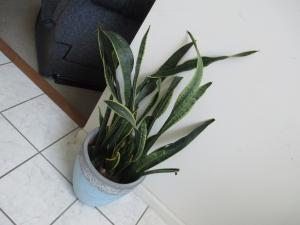 Palm Tree 6