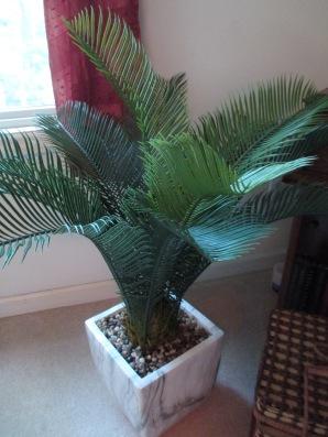 Palm Tree 8