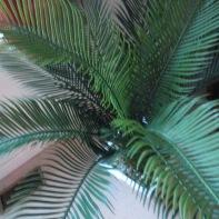 Palm Tree 9
