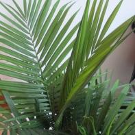 Palm Tree 12