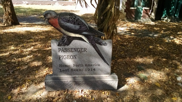 Extinct Species 7 - Passenger Pigeon