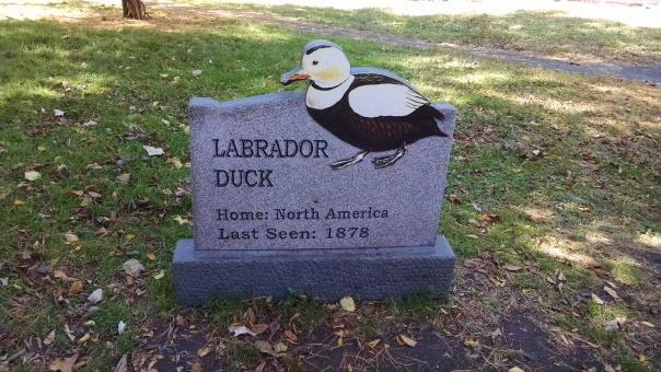 Extinct Species 9 - Labrador Duck