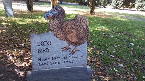 Extinct Species 10 - Dodo Bird