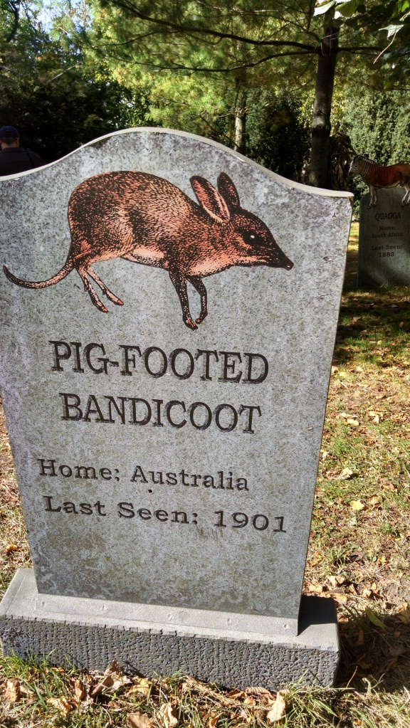 Extinct Species 11 - Pig-footed Bandicoot