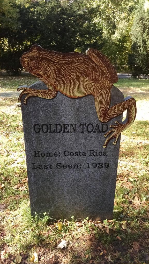Extinct Species 13 - Golden Toad