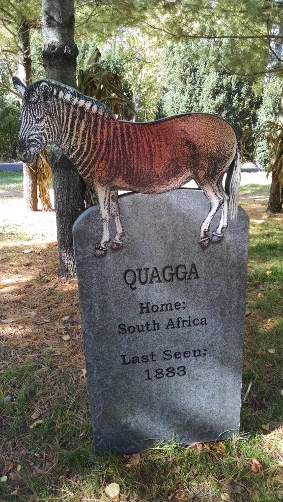 Extinct Species 14 - Quagga