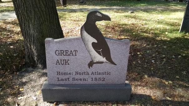 Extinct Species 15 - Great Auk