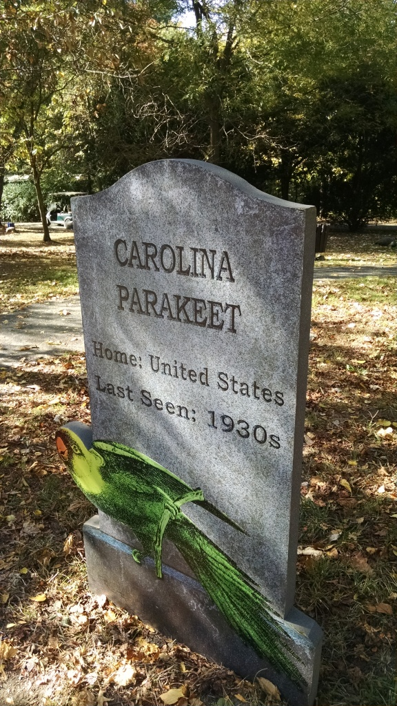 Extinct Species 16 - Carolina Parakeet