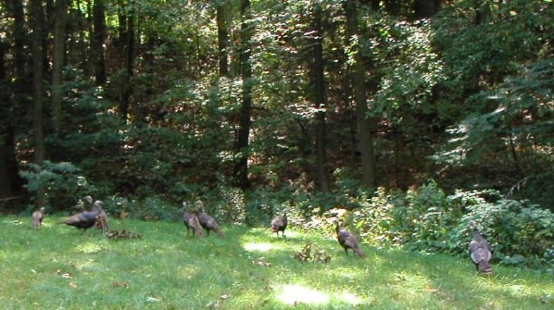 Turkeys 10-14-02