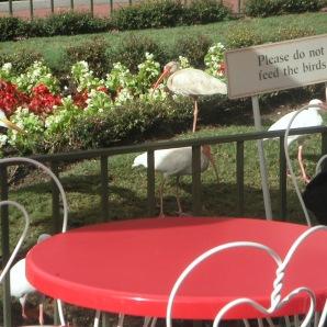 White Ibis WDW 9-19-07