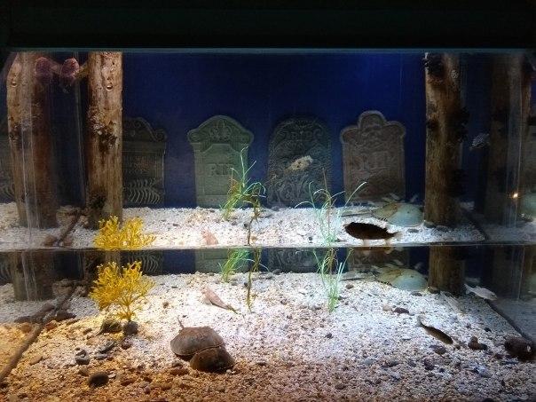 Puffer Fish Tank Cemetery