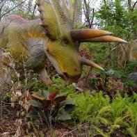Dinosaur Safari pentaceratops