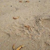 dead crab legs